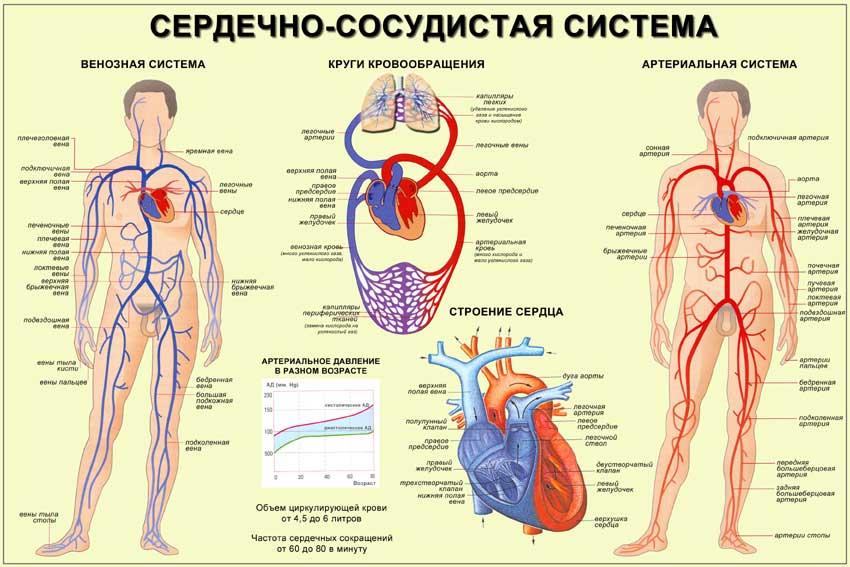 hipertenzija vaistas nuo spaudimo poilsis prie jūros su hipertenzija