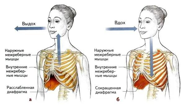 diafragminis kvėpavimas su hipertenzija