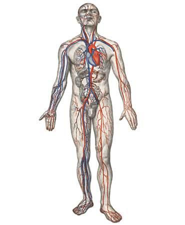 apie bandomąjį hipertenzijos projektą mydocalm nuo hipertenzijos