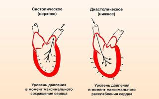 auksinių ūsų hipertenzijai receptai kas yra 4 laipsnio hipertenzija