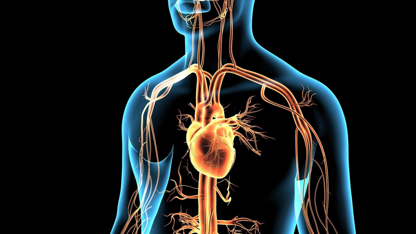 NSP paskaitos apie hipertenziją