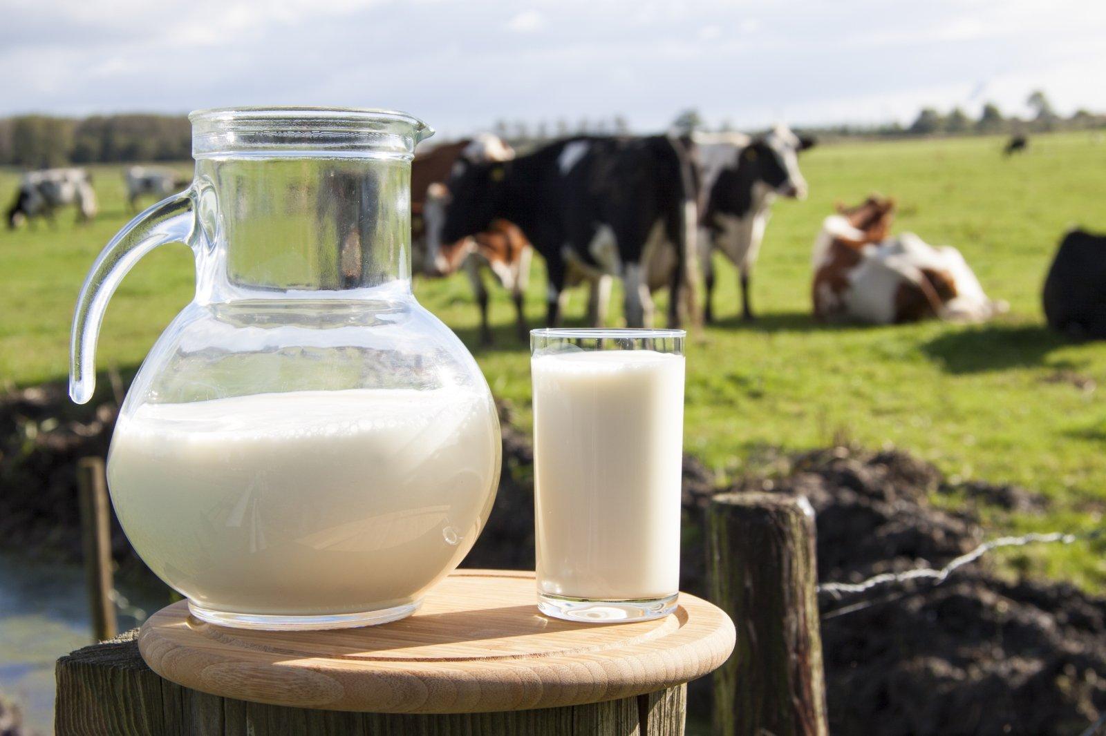 valgyti karvės širdį nauda sveikatai