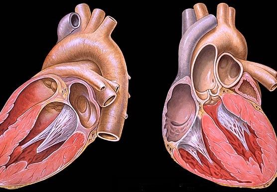 hipertenzija ir magnis ko negalima esant 2 laipsnio hipertenzijai