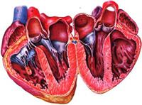 hipertenzija ir prolapsas