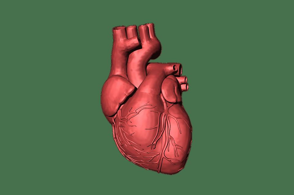 kalio ir širdies sveikata