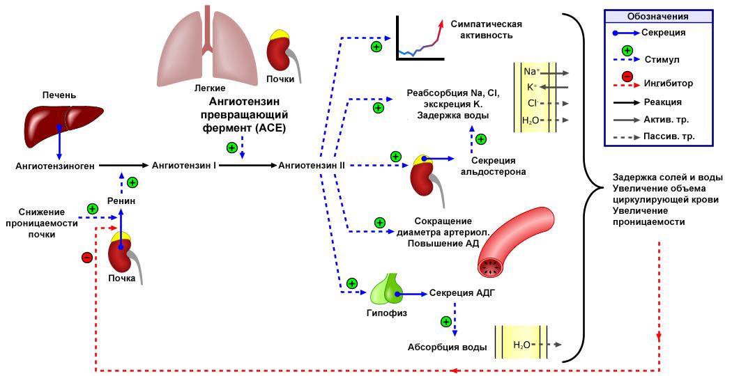 prie ko veda 2 laipsnio hipertenzija su hipertenzijos simptomais