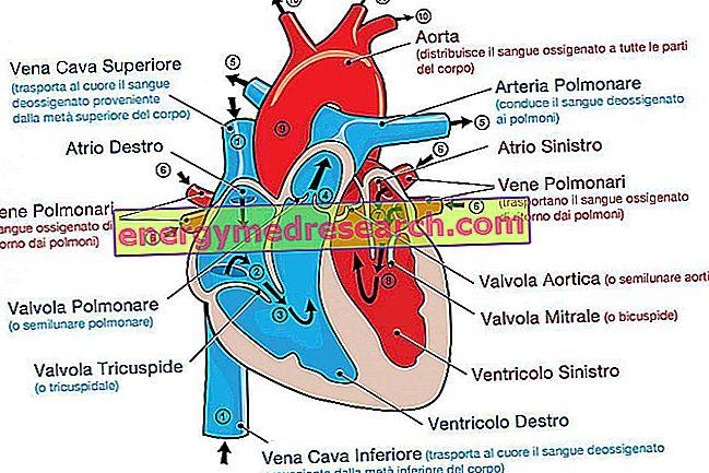 actas nuo diabeto ir hipertenzijos kas yra blogai hipertenzija